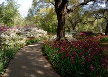 Una passeggiata attraverso il giardino Fotografia Stock