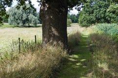 Una passeggiata del terreno boscoso Immagine Stock