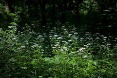 Una passeggiata nel giardino botanico Immagini Stock