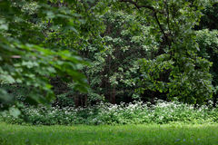 Una passeggiata nel giardino botanico Immagine Stock