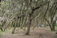 Una passeggiata nella natura Fotografie Stock Libere da Diritti