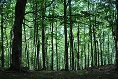 Una passeggiata nelle montagne di estate Fotografie Stock