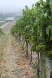 Una passeggiata nelle vigne Immagini Stock