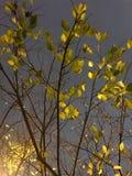 Una passeggiata notturna fotografie stock