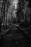 Una passeggiata sotto la tonalità Fotografia Stock Libera da Diritti
