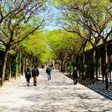 Una passeggiata in un parco fotografia stock libera da diritti