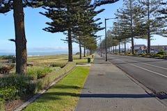Una pavimentazione allineata con gli alberi della conifera dalla spiaggia a Napier, Nuova Zelanda immagini stock