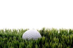 Una pelota de golf blanca en gras verdes imagen de archivo