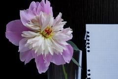 Una peonía rosada en un vidrio en un fondo de madera negro con una hoja de papel blanca fotos de archivo