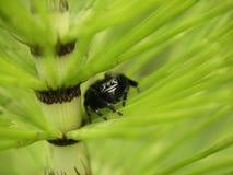 Una pequeña araña verde Imágenes de archivo libres de regalías