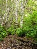 Una pequeña cala en el bosque de New Hampshire durante el verano Fotos de archivo