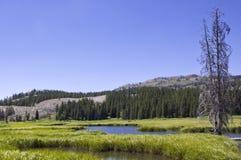 Una pequeña cala en el parque nacional de Yellowstone Imágenes de archivo libres de regalías