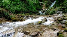 Una pequeña cascada de la corriente de la montaña atraviesa las rocas en un bosque verde almacen de video