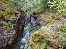 Una pequeña cascada en el bosque foto de archivo libre de regalías