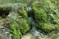 Una pequeña cascada en el bosque encima de una corriente del travertino Fotos de archivo
