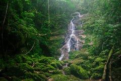 Una pequeña cascada en el bosque natural foto de archivo libre de regalías
