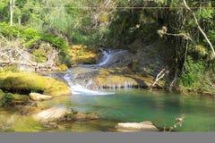 Una pequeña cascada en un lago del bosque, corrientes traga los árboles d Fotos de archivo libres de regalías