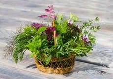 Una pequeña cesta con las hierbas curativas Fotografía de archivo libre de regalías