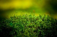 Una pequeña colina con el musgo verde en el bosque Foto de archivo