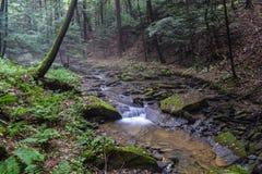Una pequeña corriente de la trucha en las montañas apalaches Fotos de archivo