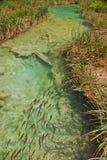 Una pequeña corriente en el parque nacional Croacia de los lagos Plitvice fotos de archivo libres de regalías