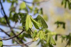 Una pequeña dulzura de la primavera foto de archivo libre de regalías