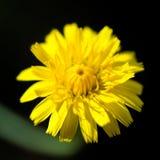 Una pequeña flor amarilla Fotografía de archivo