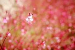 Una pequeña flor rosada de Gaur Lindhammer contra la perspectiva de muchas flores rosadas Foto de archivo libre de regalías