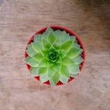 Una pequeña flor verde en la visión superior, Imagen de archivo libre de regalías