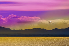 Una pequeña garceta de ganado blanca está volando sobre el lago Foto de archivo libre de regalías