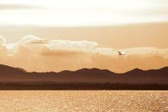 Una pequeña garceta de ganado blanca está volando sobre el lago el tiempo de la última hora de la tarde Imágenes de archivo libres de regalías