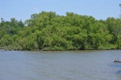 Una pequeña isla enselvada a través de un lago imagen de archivo libre de regalías