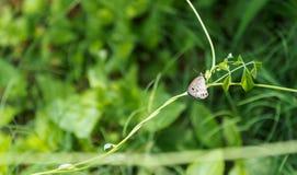 Una pequeña mariposa de madera del sátiro imagen de archivo