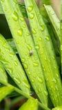 Una pequeña mosca negra con rojo observa el insecto que se sienta en licencia verde con descensos del agua Fotografía de archivo libre de regalías