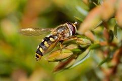 Una pequeña mosca que se sienta en las hojas Imagenes de archivo