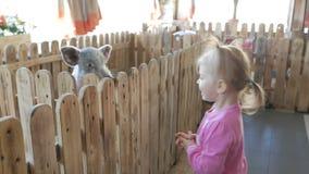 Una pequeña muchacha de dos años alimenta un pequeño cochinillo en un parque zoológico o una granja del contacto almacen de video