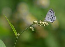 Una pequeña parada de la mariposa en una flor más pequeña Imagenes de archivo