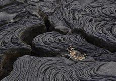 Una pequeña planta brota en Lava Field fotos de archivo