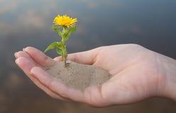Una pequeña planta en manos Foto de archivo