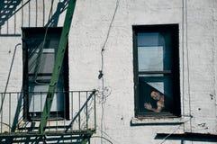 Una persona de la cartulina en una ventana en Manhattan Foto de archivo libre de regalías