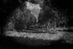 Una pesadilla en el bosque fotografía de archivo libre de regalías