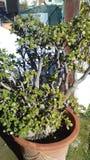 Una pianta Fotografia Stock