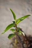 Una pianta che sopravvive nell'ambiente ostile fotografia stock