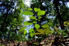 Una pianta in cima ad una foresta dello stato di Withlacoochee di franare Fotografie Stock Libere da Diritti