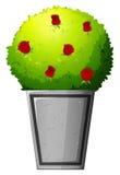 Una pianta con i fiori rossi Fotografia Stock Libera da Diritti