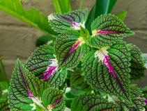 Una pianta con le foglie salienti luminose immagini stock