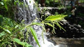 Una pianta davanti ad una cascata immagini stock libere da diritti