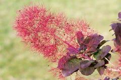 Una pianta di fioritura dispari Fotografia Stock Libera da Diritti
