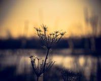 Una pianta di inverno Fotografie Stock