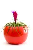 Una pianta di POT graziosa Immagini Stock